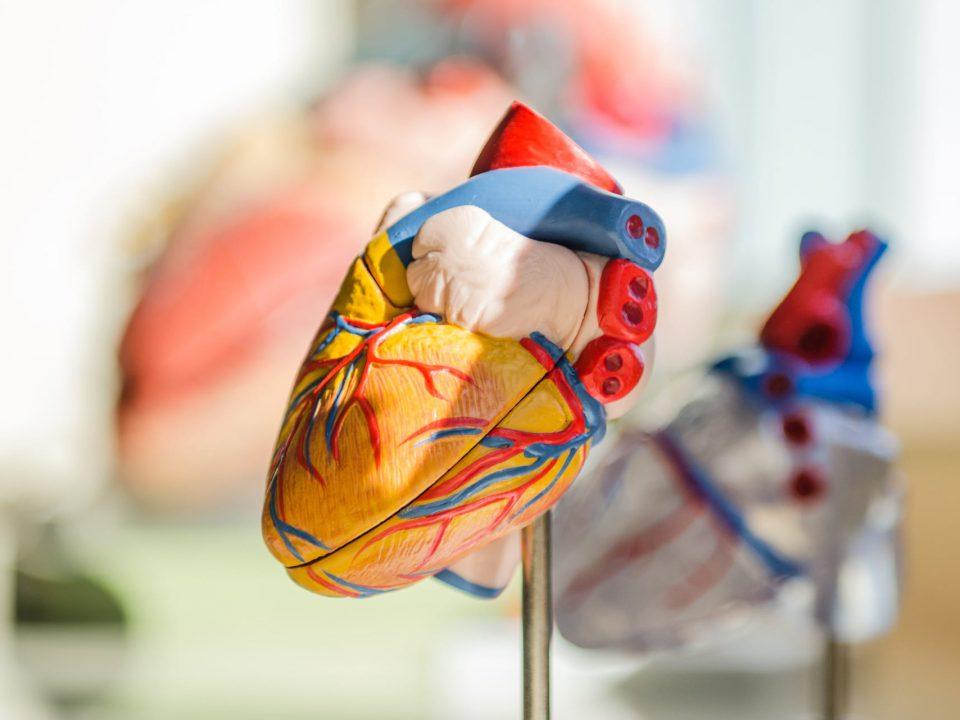 lesion-cardiaca-laboral
